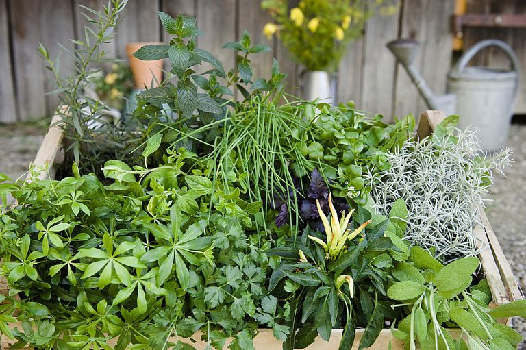 Ir de formas naturales y hierbas de uso