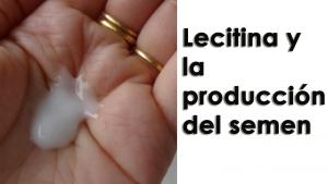 Lecitina y la producción del semen - guía completa para aumentar volumen del eyaculado
